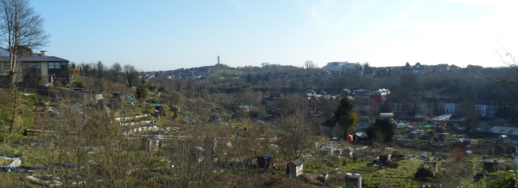 Ashley hill allotments
