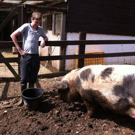 boy with a pig