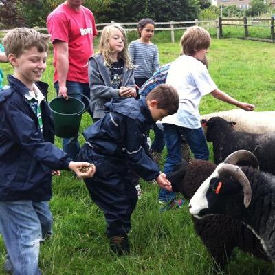 School children feeding sheep at the farm