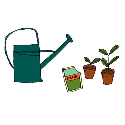 watering can and seedlings in pots