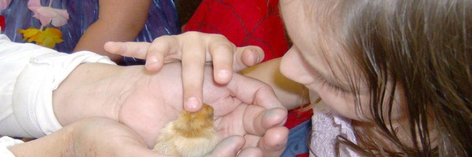 child handling a chick