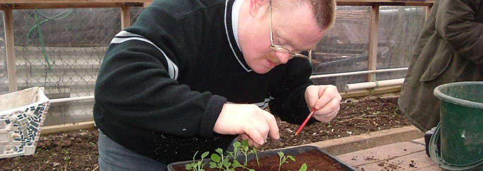 trainee propagating seeds