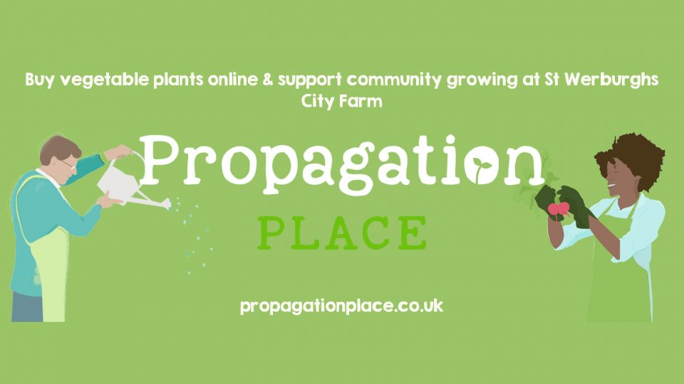Buy vegetable plants online and support community growing at St Werburghs City Farm