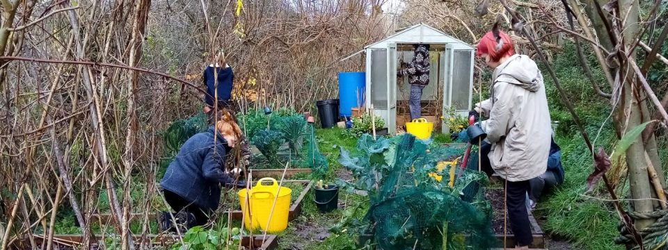 Gardening and Growing Food at Boiling Wells