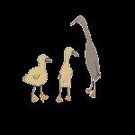 Ducks Cartoon